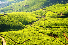 Tea plantation in Munnar, Kerala, India (CamelKW) Tags: 2014 india kerala tea plantation munnar hillstation mountain skies