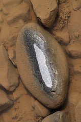 Wet stone . . (weirdcrank) Tags: stone pebble wet oval dry water