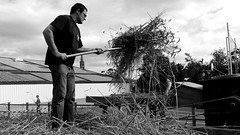 Work on wheat threshing machine (patrick_milan) Tags: plouguin noiretblanc blackandwhite noir blanc monochrome nb bw black white street rue people personne gens streetview homme man viril beau boy garon beautiful portrait face candide