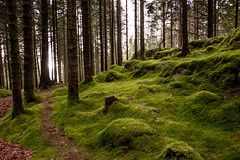 Moss and light (beatriceverez) Tags: moss light texture path forest