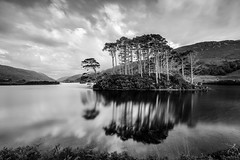 Eilean na Moine (Forester__) Tags: longexposure lake relfections mountains trees grass grassland clouds sky ndfilter neutraldensity sunset blackandwhite bw scotland eileannamoine locheilt uk