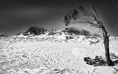 Las Dunas (Loiamax) Tags: tarifa puntapaloma punta paloma black white blackandwhite biancoenero bn duna dune las dunas estate summer andalusia andalucia vacanze albero sabbia ombre orme