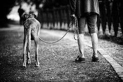 (francesco_if ) Tags: leggs blackandwhite biancoenero dog outdoor park dof back prospective streetphotography street