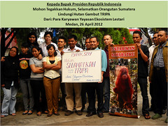 YEL, Medan, Indonesia (endoftheicons) Tags: orangutan internationaldayofaction