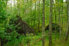 Big Hill Pond State Park (bhophotos) Tags: statepark trees usa nature landscape geotagged nikon tennessee roots trail swamp stump d80 2470mmf28g bighillpond bruceoakley bighiilpondstatepark