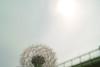 たむぽぽぽ〜ん (punipuki) Tags: city sky cloud flower nature japan tokyo spring sigma tamagawa floralappreciation dp2s