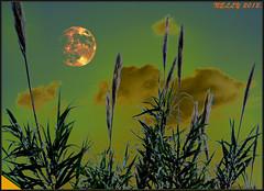 *SUMMERTIME II* (MONKEY50) Tags: blue sunset summer sky orange plants cloud sun moon plant color colour macro green art colors yellow clouds digital landscape leaf spring colours fantasy paintshoppro soe natures hypothetical beautifulphoto artdigital greenscene justclouds skytheme flickraward skyascanvas awardtree pentaxart exoticimage blinkagain musictomyeyeslevel1