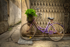 Purple in the Alley (davidkoiter) Tags: street city travel urban plant green bike bicycle wall canon vintage eos alley gate quiet basket purple vietnam 7d l series hanoi f4 tranquil 1740 2012 f4l koiter davidkoiter