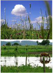 June Rain and Shine (cure di marmo) Tags: flowers summer sky horses cloud rain weather puddle diptych extreme paddock deluge
