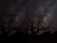 Editing AstroPhotos (mthomson34) Tags: tree way stars victoria milky milkyway wilsonspromontory