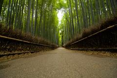 Sagano Bamboo Forest (Imahinasyon Photography) Tags: japan forest canon mark bamboo arashiyama ii   5d kyouto  sagano japann dblringexcellence