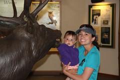Jovie putting her hand in an elk statue mouth (Aggiewelshes) Tags: travel june statue colorado lisa rmnp estespark rockymountainnationalpark 2012 jovie fallrivervisitorcenter