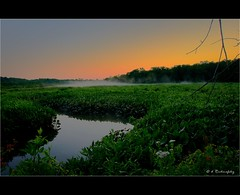 River Bog (Darrenlr) Tags: morning blue trees summer sky sun mist seascape reflection green water beauty darren fog sunrise river landscape dawn md nikon branch lily 26 outdoor reflect reflective theme pax marsh nikkor dslr bog 52 patuxent 18105 patuxentriver southernmaryland d90 2652 18105mm nikond90 18105mmf3556 vr18105 52weeks2012