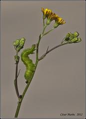 NATURALEZA en el Bosque de ORGI - NAVARRA  C.M. (Cesalf) Tags: naturaleza
