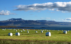 Tn  Reykhlasveit (h) Tags: blue sky green field clouds landscape iceland hey july hay agriculture 2012 sveit breiafjrur tn reykhlasveit landbnaur