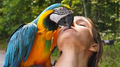animal kiss