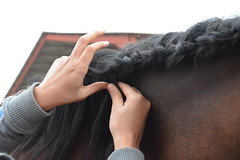 NIKON6 398 (Cloudy Child) Tags: nikon6 horse cheval horseriding dressage quitation complicit sister family dtail