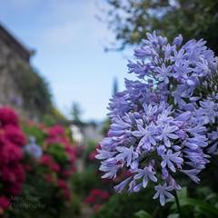 le jardin en t (summer garden) (l'imagerie potique) Tags: limageriepotique poeticimagery bretagne vacances vacation summer garden jardin t fleurs