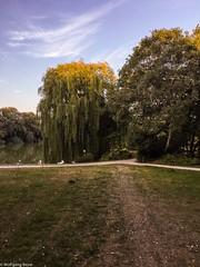 Obersee, Berlin (BLN1989) Tags: trauerweide berlin park