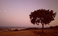 sunset (mesutmutlu) Tags: sunset turkey meadow lea bursa tepe karkitepedegnbatm