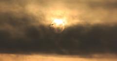 Good Morning (iNeeraj) Tags: sun sunrise clouds bird morning day outdoor sky outside flickraward5 greatphotographers