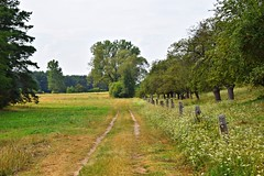 summer by the river (JoannaRB2009) Tags: green path road countryside meadow flowers summer trees orchard nature landscape view strosko warta river rzeka dzkie lodzkie polska poland valley
