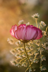 Wild Flowers at Sunset (Mark Seton) Tags: miscellaneous sunset wildflower