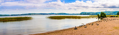 DSC_3218-Pano (mihail.suontaus) Tags: d7100 nikon sigma panorama nature lahti finland sky water bird boat sand lake cloud clouds lightroom