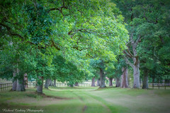 Avenue of Trees (Chalky666) Tags: tree trees wood woodland avenue foliage painterly art l
