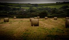 DSC_3788 (kapper22) Tags: bales hay outdoor sky landscape
