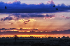 When the sun rises 51 (Abd-Elilah Ouassif) Tags: ciel nuages soleil aube leverdujour maroc extrieur matin lumire paysage calme horizon couleur cloudy dawn sunsunrisemorocco morning outside light color calm landscape abdelilah ouassif nikon d700055300mm f4556g vrnikkor 2016