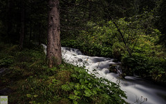 100% untapped nautre (Double.D - Photography) Tags: natur bach brook plants pflanze tree baum wet nass nd filter explore outdoor outside austria sterreich canon canon600d doubled sigma 1750mm grosarl silceffect long exposure wasser water