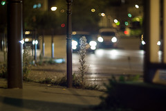 IMG_1401 (Lens a Lot) Tags: bokeh swirly depth field vintage manual russian prime lens fixed zenit helios 40   red  8 5 cm f 15 85mm flower light color profondeur de champ extrieur fleur plante weed night car street photography urbex