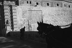 (Chaoqi Xu) Tags: 2015 600d canon chaoqi xu photo fotografia foto eos city citt photography travel viaggio          beni culturali monumento bianco nero black white bw    malta valletta sliema sea horse cavallo