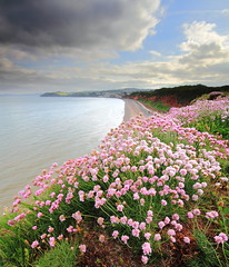 Evening flowers (James ~ Anderson) Tags: flowers sea clouds canon seaside angle wide sigma devon filter lee nd warren 06 1020 dawlish 550d