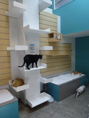 Senior Cat Room New Shelter (Philosopher Queen) Tags: cats houston volunteer shelter animalshelter ffl nokill
