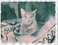 Polaroid Transfer Her Favorite Blanket