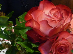 rose indoor (solonanda non c' pi) Tags: flowers nature rose rosa natura fiori thegalaxy masterphotos ilroseto amazingdetails artistoftheyearlevel2 musictomyeyeslevel1 rememberthatmomentlevel1