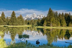 SCHWABACHER'S LANDING (mark_rutley) Tags: mountains bird reflections jackson beaver wyoming tetons americanrobin schwabacherslanding