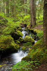Cascade Along Silver Falls Trail (Michael Pancier Photography) Tags: usa forest washington unitedstates waterfalls rainier pacificnorthwest washingtonstate mtrainier fineartphotography cascademountains travelphotography mtrainiernationalpark commercialphotography naturephotographer landscapephotographer fineartphotographer michaelapancier americasnationalparks wwwmichaelpancierphotographycom cascademountainchain