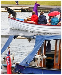 Canines Ahoy ! (Lilla~Rose) Tags: uk girls friends party summer dog color colour dogs beer coffee fashion june thames canon river boats team colorful candid champagne events buckinghamshire hats parties canine crew dresses rowing laughter colourful candids berkshire riverthames oxfordshire picnics 2012 henleyonthames rowers theseason pimms champers hrr henleyregatta henleyroyalregatta champoo summerevents lightroom3 dogsonboat canon550d hoorayhenley thesocialseason dogsafloat