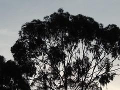 AO ANOITECER... (Marina Vianna.) Tags: black detail bird night pssaro noite anoitecer detalhes