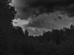 In the distance a crack could be heard (Dan:Brown) Tags: bw storm clouds virginia aperture woods nik s90