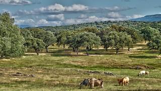 por tierras de Salamanca