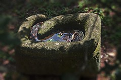 Stone watering / trough stone (KF-Photo) Tags: tbingen trog trnke steintrog steintrnke