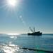 Shrimp Boats 5