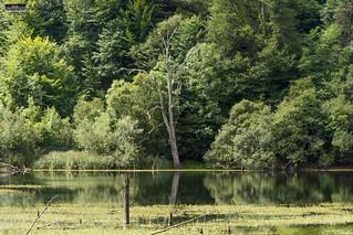Lamioxin Urmaela. Lamioxin Lagoon. Laguna de Lamioxin. Urkabustaiz. Zuia-Gorbeialdeko Kuadrilla. Araba. Euskal Herria (Basque Country). 2016.07.24