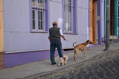 one on a leash (cam17) Tags: chile valparaiso valparaisochile oneonaleash dogwalker walkingthedogs onewellbehaved