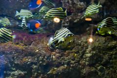 FujiXE2-0171 (QTTheory) Tags: cvg cincinnati ohio newport aquarium newportaquarium fujifilm fujinon xe2 xf 1855mmf284rlmois
