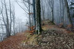 misty forest (welenna) Tags: switzerland schwitzerland fog forest winter wald nebel natur natural mist mountains mountain misty morgen morning jura berge